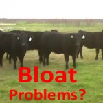 Bloat problems with cattle in west Texas